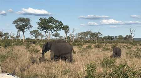 Países-que-Falam-Inglês-como-Segunda-Língua-safari-africa-do-sul